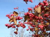 Viirpuu sügisvärvides